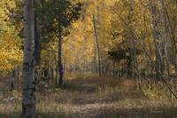 _IGP3869.Fall at Beartrap