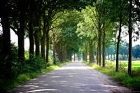 Dutch Road by Carol Groenen