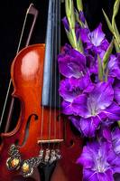 Violin and purple glads