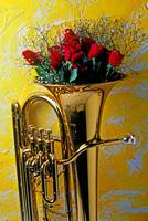 Tuba with red roses