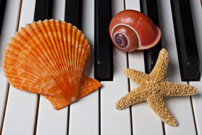 Seashell and starfish on piano