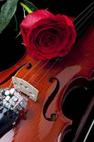 Red Rose With Violin