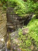 Watkins Glen with Ferns, Finger Lakes, New York