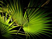 Fronds (Key West)