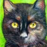 CatsDogsHorse gallery