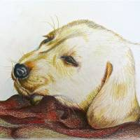 dog puppy by Louise Dionne