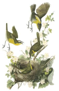audubon chat rooms Teachat teacritic teamuse teachef john james audubon tea room 329 washington st audubon, iowa 50025.