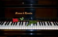 Red Rose and Piano
