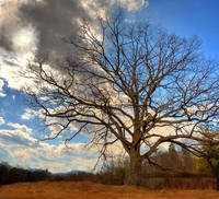 Tree at Center for Spiritual Living Asheville by Joe Gemignani