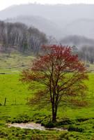 Red Tree and Creek,Waynesville NC by Joe Gemignani
