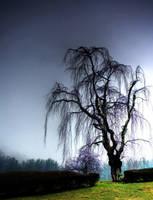 Clyde Cemetery, Dead Tree by Joe Gemignani