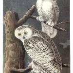 Audubon gallery