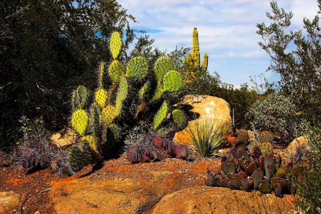 Cacti and Rocks