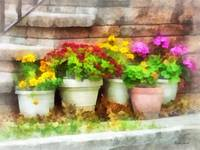 Flowerpots With Autumn Flowers