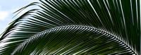 Palm Frond-Horizontal by Joe Gemignani