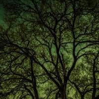 Skeleton Tree Art Prints & Posters by Jeff Smee