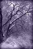 Winter in Purple by Carol Groenen