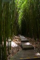 Dark Bamboo Forest