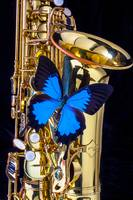 Blue butterfly on sax