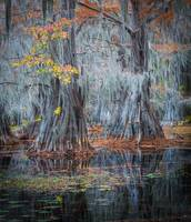 Caddo Lake Fall
