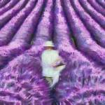 Lavender Fields by Leapdaybride Visual Arts