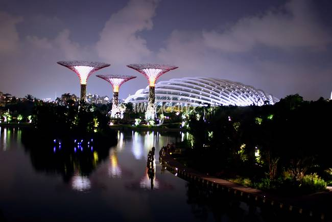 Garden by the Bay night, Singapore )MUST BUY !(