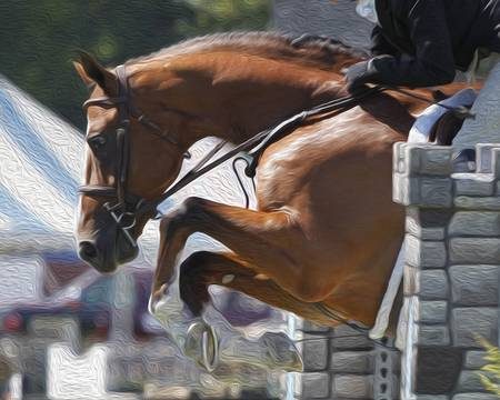 Horse Show Jumper-11