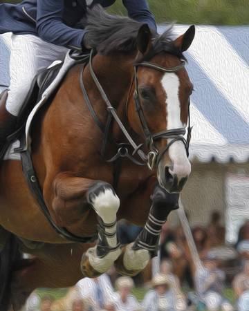 Horse Show Jumper-12