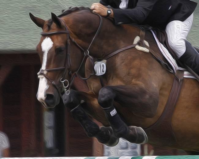 Horse Show Jumper-15