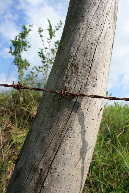Rusted Barbed Wire