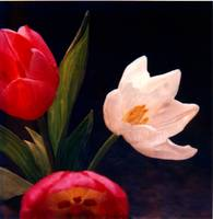 Tulips#3 by Joe Gemignani