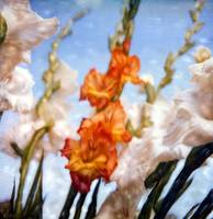 Shelley's Flowers#1 by Joe Gemignani