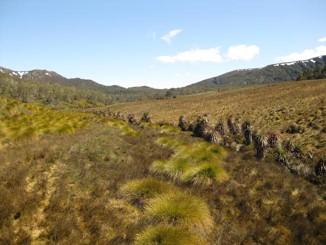 Near Crater Lake, Cradle Mountain, Tasmania 001