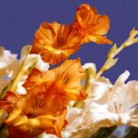 Shelley's Flowers#2 by Joe Gemignani