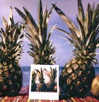 Pineapples and Polaroid by Joe Gemignani
