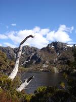 Crater Lake, Cradle Mountain, Tasmania 002