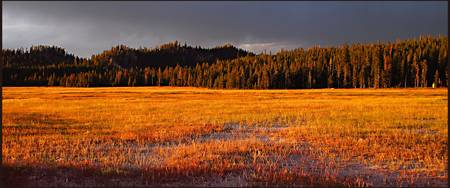 Yellowstone Meadow in Sunset