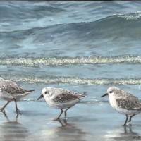 Sandpipers Art Prints & Posters by Diane Mannion