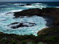 Point Lobos Highlights