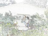Flowers Hut 001A PencilColour
