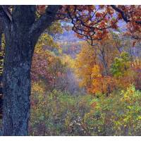 Skyline Drive Art Prints & Posters by Kate Ballard