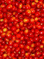 Wild Hawaiian Coffee Cherries