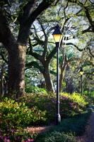 Forsyth Park Spring Walk by Carol Groenen