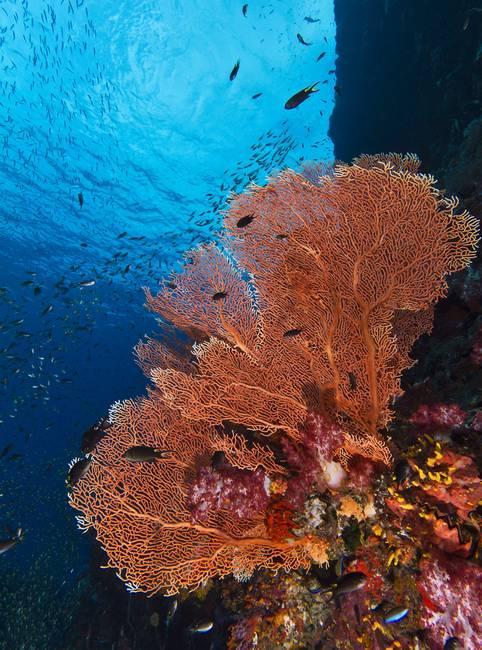 Gregorian fan coral by tyler huston publicscrutiny Images
