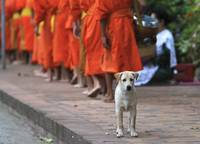Monks and a Dog