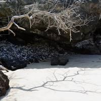 1 Ocean Branch 2 by J DeVereS