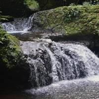 1 Hawaii Garden Falls 4 OP by J DeVereS