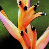 1 Hawaii Garden Bloom 16 a WCOP Crop by J DeVereS