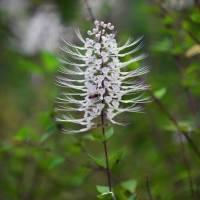 1 Hawaii Garden Bloom 4OP by J DeVereS