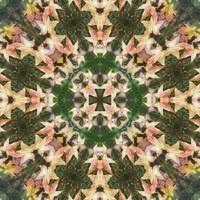 Leaves Memory Kaleidoscope 3